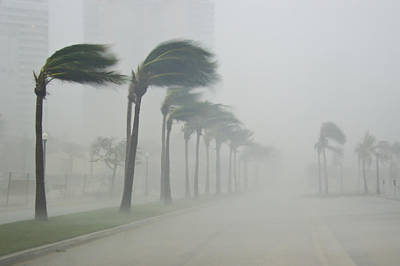 Natural Forces Photograph - Palms Blow In 100 Mile-per-hour Winds by Mike Theiss