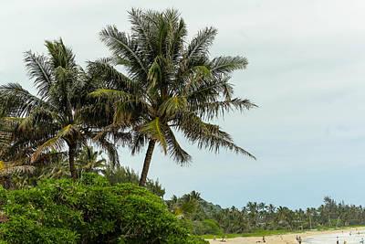 Photograph - Palms by Carolyn Ricks