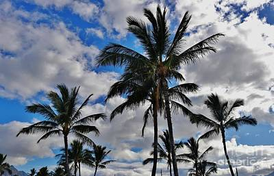 Photograph - Palms In Paradise by Craig Wood