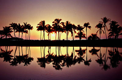 Palms In Silhouette Art Print by Michael  Cryer