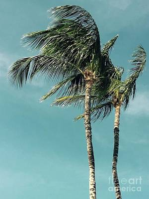 Photograph - Palms In The Wind by Karen Nicholson