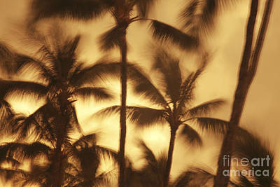 Palms In The Wind Art Print by Vince Cavataio - Printscapes