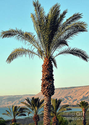 Photograph - Palms Of Ma'agan by Lydia Holly