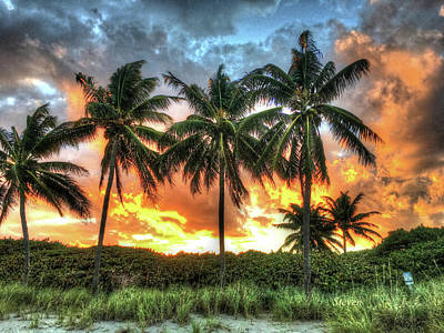 Photograph - Palms On Fire by Steven Lebron Langston