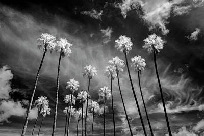 Flower Child Photograph - Palms by Sean Foster