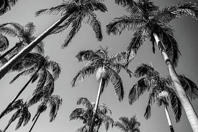 Photograph - Palms Up I by Ryan Weddle
