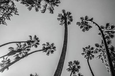 Photograph - Palms Up II by Ryan Weddle