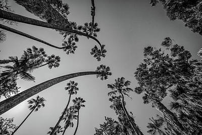 Photograph - Palms Up IIi by Ryan Weddle