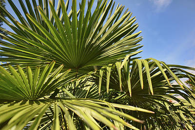 Photograph - Palms Up by Paulette B Wright