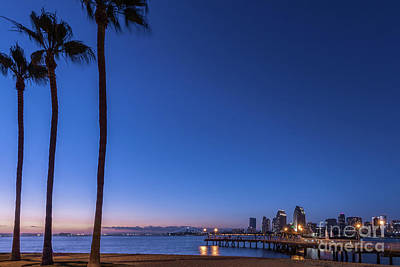 Photograph - Palms Watching The San Diego Skyline by David Levin