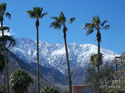 Photograph - Palms With Snow by Randall Weidner