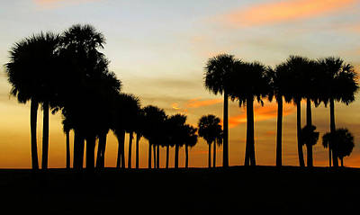 Photograph - Palmscape by David Lee Thompson