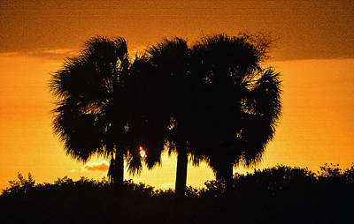 Photograph - Palmset by David Lee Thompson