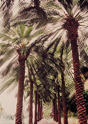Digital Image Painting - Palmtree by Jeanette Korab