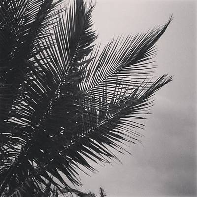 Black And White Wall Art - Photograph - Palm Trees  Against A Stormy Sky by Colleen Kammerer