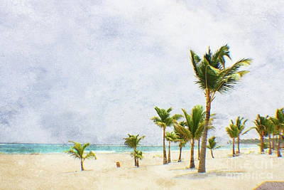 Photograph - Palmtrees In Punt Cana by Paul Cammarata