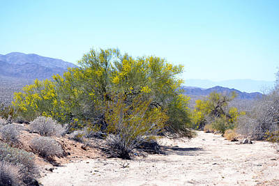 Photograph - Palo Verde Wash by rd Erickson