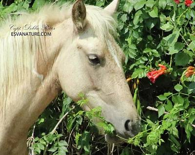 Photograph - Palomino 5146 by Captain Debbie Ritter
