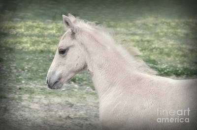 Photograph - Palomino Foal Headshot by Jim And Emily Bush