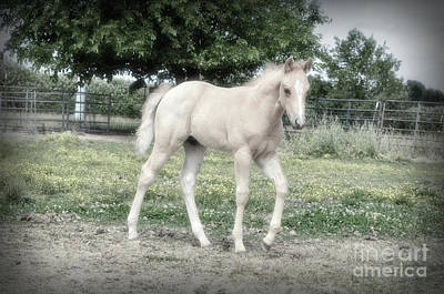 Photograph - Palomino Foal In Pasture by Jim And Emily Bush
