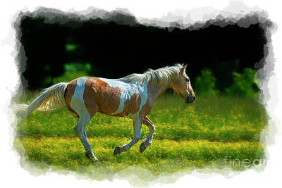 Photograph - Palomino Galloping In Field by Dan Friend