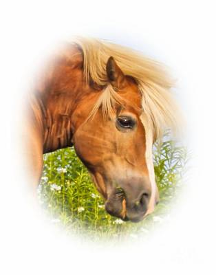 Art Print featuring the photograph Palomino Head by Debbie Stahre