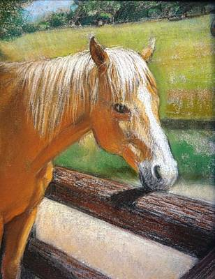 Pastel - Palomino Horse Portrait by Sue Halstenberg
