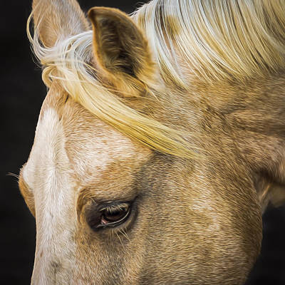Wall Art - Photograph - Palomino by Michel Emery