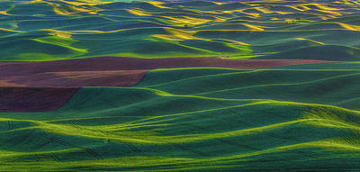 Photograph - Palouse 4 by Thomas Hall