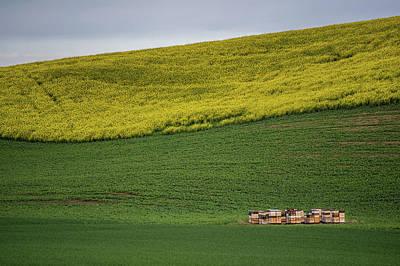 Photograph - Palouse Bee Hives by Paul Freidlund