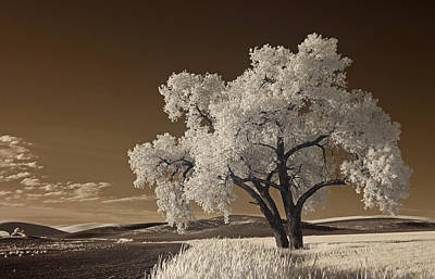 Photograph - Palouse by Bob Cournoyer