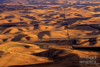 Photograph - Palouse Farmland by Jim Corwin