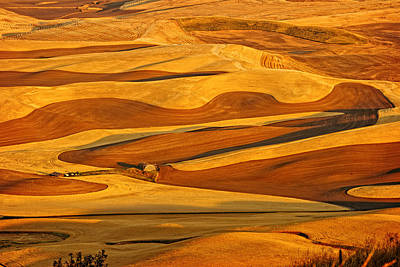 Photograph - Palouse Gold And Brown by Mary Jo Allen