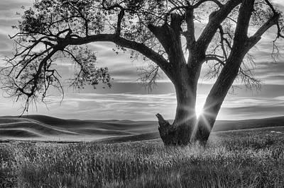 Palouse Sentinel - Black And White Art Print