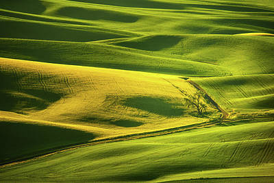 Photograph - Palouse Shades Of Green by Dan Mihai