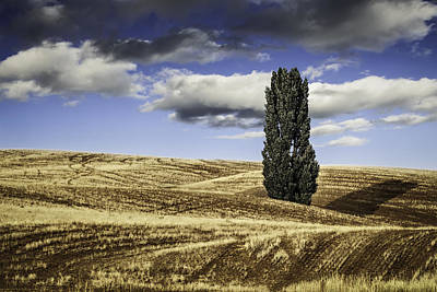 Photograph - Palouse Solitaire Clouds by Eduard Moldoveanu