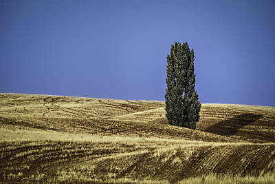 Soil Digital Art - Palouse Solitaire by Eduard Moldoveanu