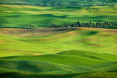 Photograph - Palouse Spring Hills by Mary Jo Allen