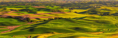 Palouse Art Print by Thomas Hall