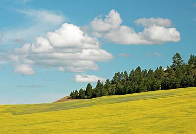 Photograph - Palouse Treeline by Doug Davidson