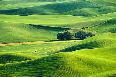 Photograph - Palouse Trees And Hills by Mary Jo Allen