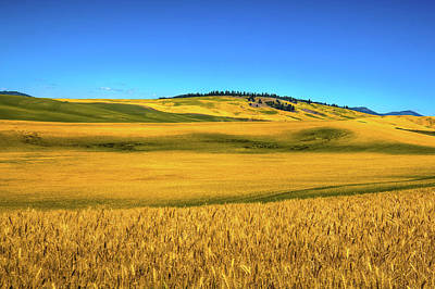 Photograph - Palouse Wheat Field by David Patterson