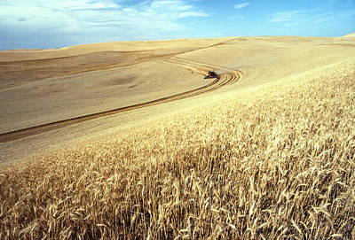 Photograph - Palouse Wheat by USDA and Photo Researchers
