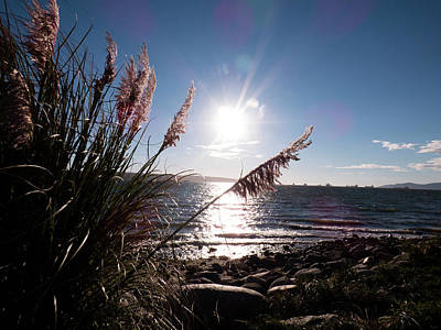 Pampas By The Sea Art Print