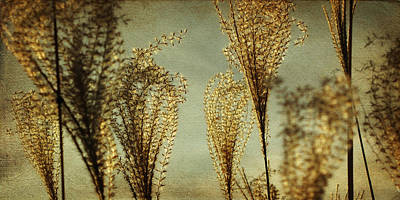 Pampas Grass Art Print by Amy Tyler