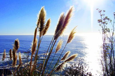 Photograph - Pampas Grass And The Pacific 2 by Jodie Marie Anne Richardson Traugott          aka jm-ART