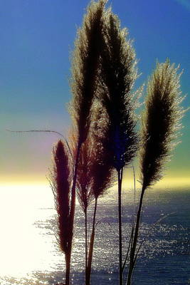 Photograph - Pampas Grass And The Pacific by Jodie Marie Anne Richardson Traugott          aka jm-ART