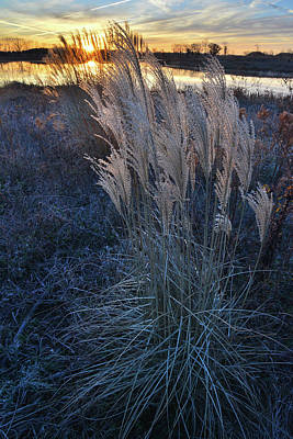 Photograph - Pampas Grass At Sunrise In Lakewood by Ray Mathis