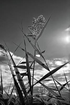 Photograph - Pampas Grass II by Angie Tirado