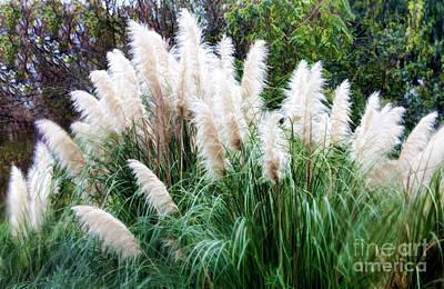 Photograph - Pampas Grass by Joan Bertucci